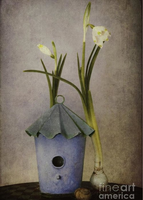 Still Life Greeting Card featuring the photograph March by Priska Wettstein