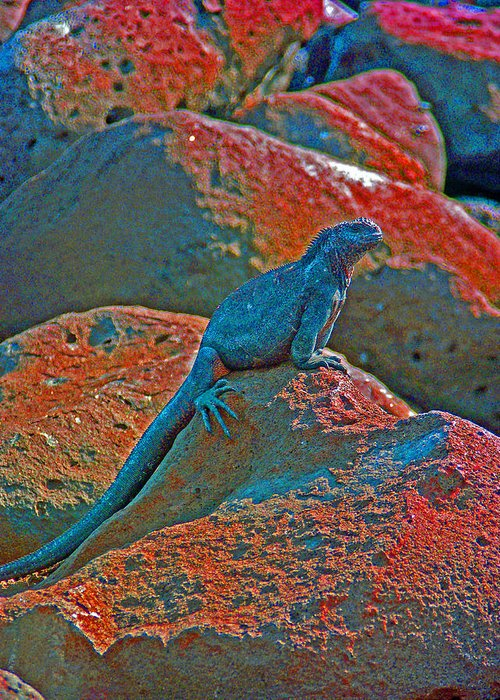 Nature Greeting Card featuring the photograph Marine Iguana by Ladonna Idell