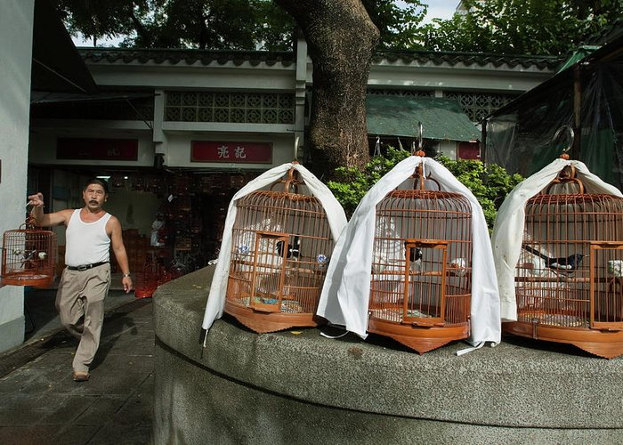 Adult Greeting Card featuring the photograph Market Vendor Selling Caged Birds by Sami Sarkis