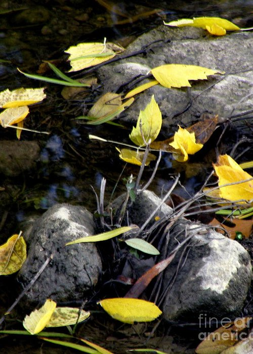Leaves Greeting Card featuring the photograph Marooned by Joe Jake Pratt
