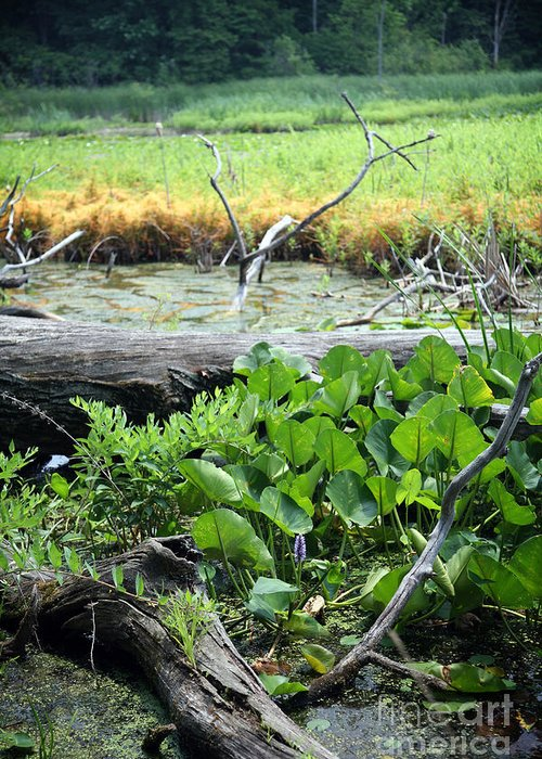 Marsh Greeting Card featuring the photograph Marsh by Jeannie Burleson