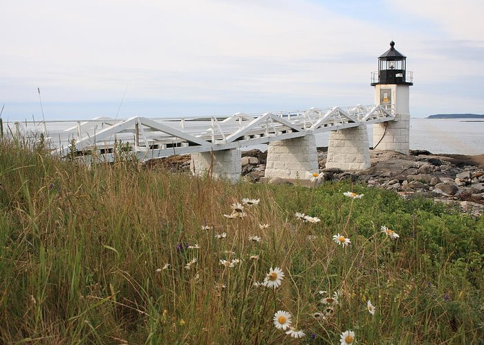 Seascape Greeting Card featuring the photograph Marshall Point Daisies by Doug Mills