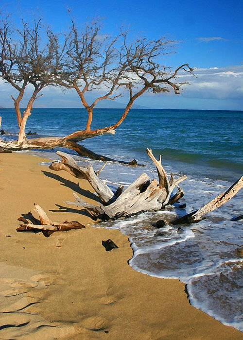 Maui Greeting Card featuring the photograph Maui Beach Dirftwood Fine Art Photography Print by James BO Insogna
