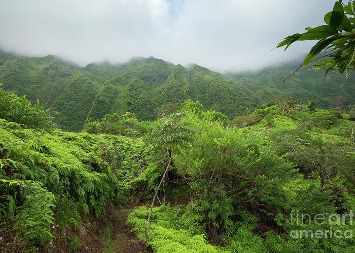 Hawaii Greeting Card featuring the photograph Maunawili Demonstration Trail by Charmian Vistaunet