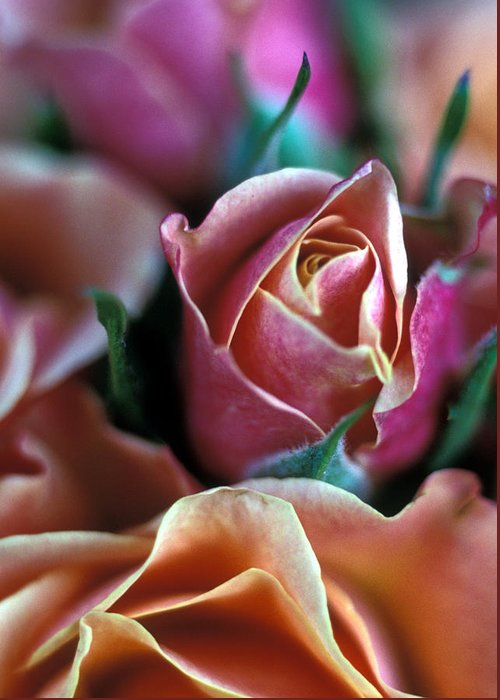 Roses Greeting Card featuring the photograph Mauve And Peach Roses by Kathy Yates