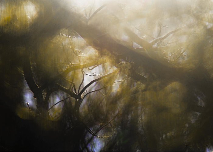 Mist Greeting Card featuring the photograph Me Fuddled by Linda McRae