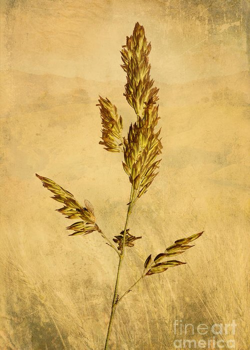 Nature Greeting Card featuring the photograph Meadow Grass by John Edwards