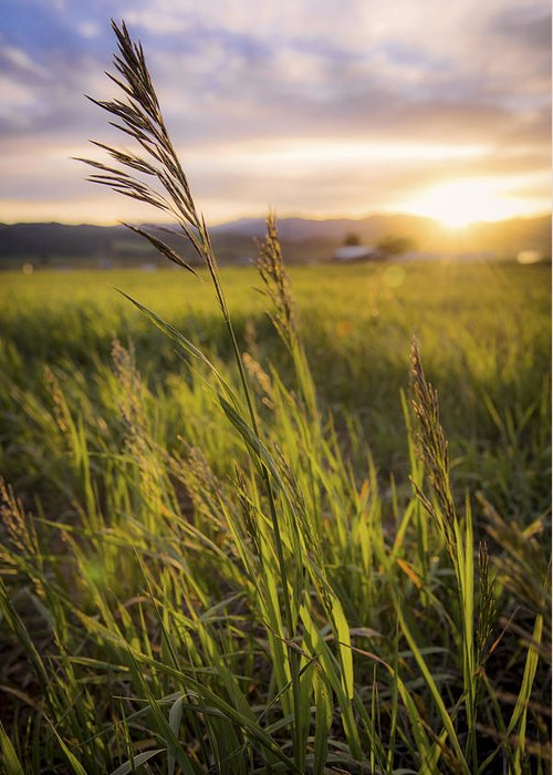 Meadow Light Greeting Card featuring the photograph Meadow Light by Chad Dutson