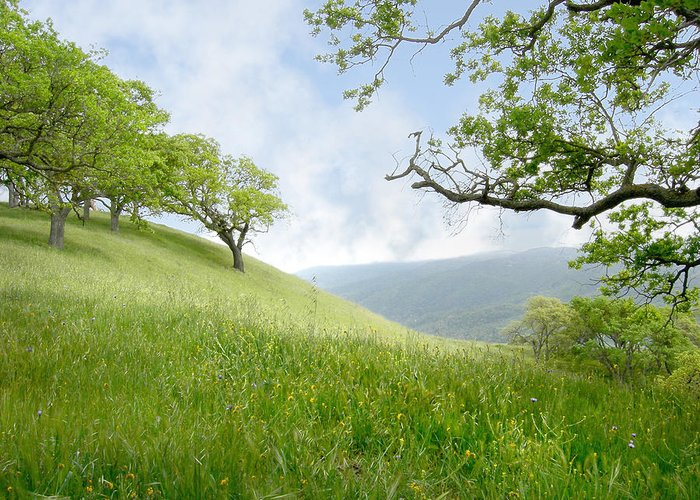 Landscape Greeting Card featuring the photograph Meadow View Spring by Karen W Meyer