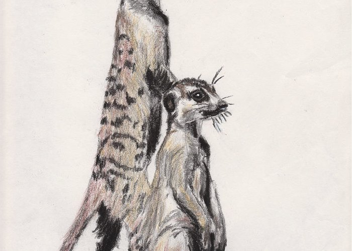Wildlife Greeting Card featuring the drawing Meerkats by Marqueta Graham