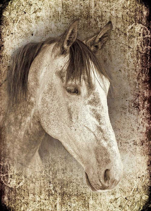 Horse Greeting Card featuring the photograph Meet The Andalucian by Meirion Matthias