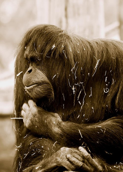 Orangutan Greeting Card featuring the photograph Melancholy by Lesley Smitheringale