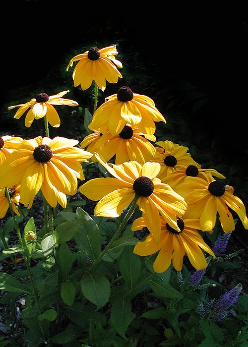 Flowers Greeting Card featuring the photograph Mellow Yellow by Ferrel Cordle