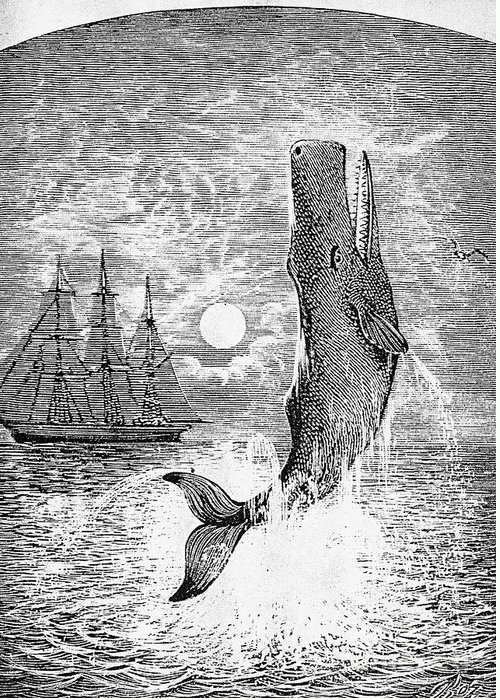 19th Century Greeting Card featuring the photograph Melville: Moby Dick by Granger