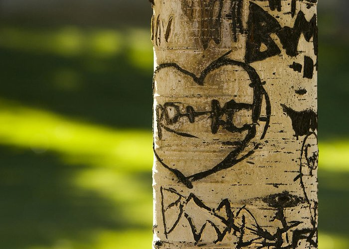 Carvings Greeting Card featuring the photograph Memories In The Aspen Tree by James BO Insogna