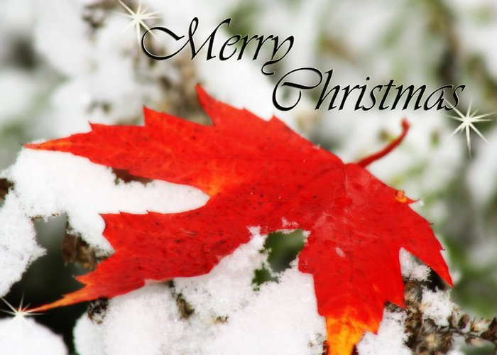 Christmas Card Greeting Card featuring the photograph Merry Christmas Leaf by Cathy Beharriell