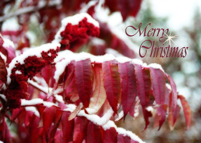 Christmas Card Greeting Card featuring the photograph Merry Christmas Red Leaves by Cathy Beharriell