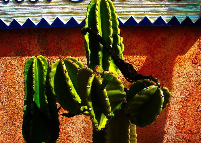 Mexico Greeting Card featuring the photograph Mexican Style by Susanne Van Hulst