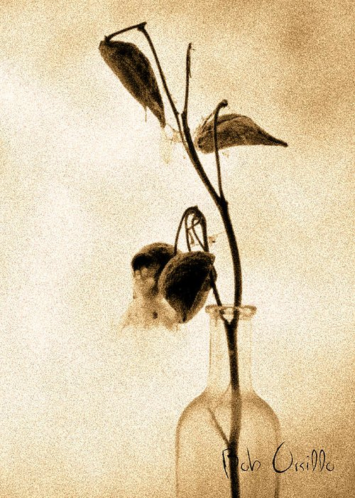 Plant Greeting Card featuring the photograph Milk Weed In A Bottle by Bob Orsillo
