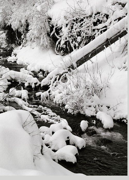 Mill Creek Greeting Card featuring the photograph Mill Creek Canyon In Winter by Dennis Hammer