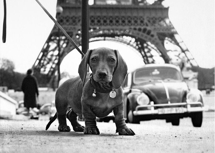 Eiffel Tower Greeting Card featuring the photograph Milo Mon Chien by Hans Mauli