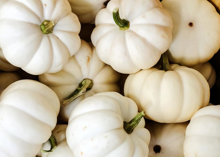 Mini White Pumpkins Greeting Card featuring the photograph Mini White Pumpkins by Cynthia Woods