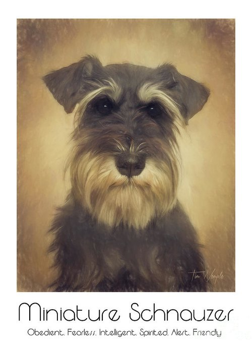 Miniature Greeting Card featuring the digital art Miniature Schnauzer Poster by Tim Wemple