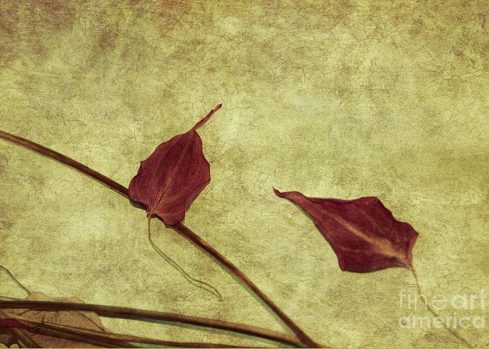 still Life Prints Greeting Card featuring the photograph Minimal Art by Aimelle