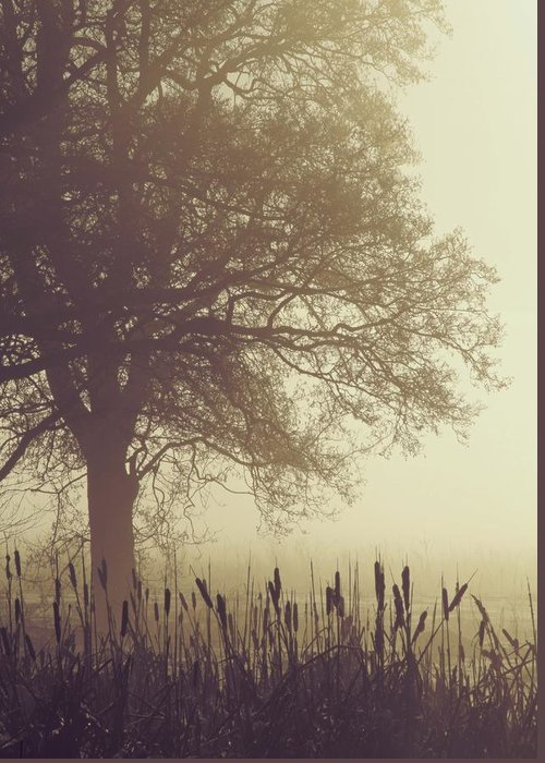 Fog Greeting Card featuring the photograph Mist by Odd Jeppesen