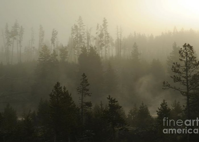 Fog Greeting Card featuring the photograph Misty Morning by Dennis Hammer