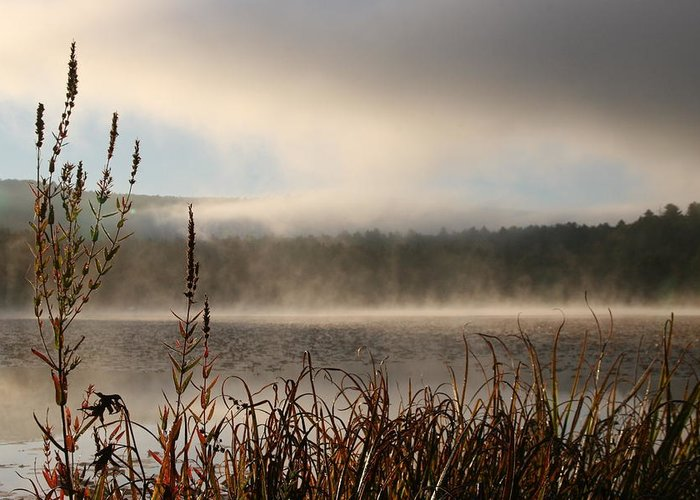 Misty Morning Greeting Card featuring the photograph Misty Morning by Linda Russell
