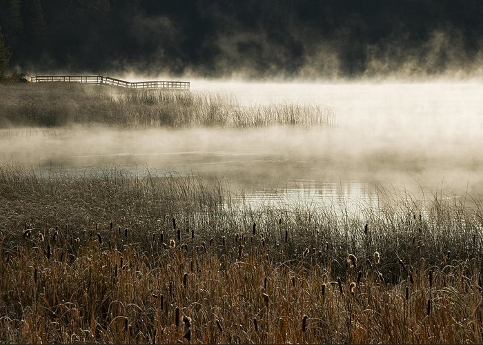 Misty Greeting Card featuring the photograph Misty Morning by Peter Olsen
