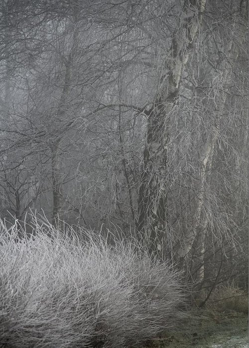 Winter Greeting Card featuring the photograph Misty Winter Day by Odd Jeppesen