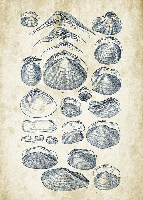Freshwater Mussel Greeting Cards