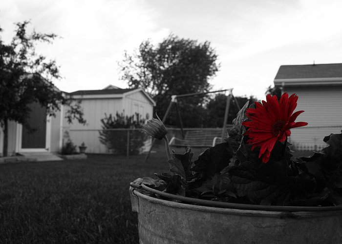 Backyard Greeting Card featuring the photograph Mom's Backyard by Dylan Punke