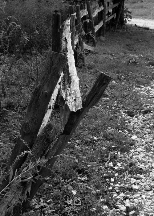Ansel Adams Greeting Card featuring the photograph Momsvisitfence2 by Curtis J Neeley Jr