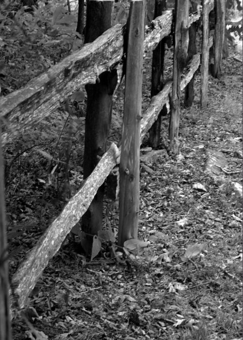 Ansel Adams Greeting Card featuring the photograph Momvisitfence-carterlane by Curtis J Neeley Jr