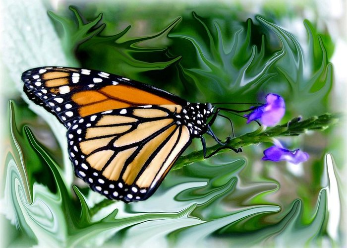 Monarch Butterfly Greeting Card featuring the photograph Monarch Butterfly 4 by Jim Darnall