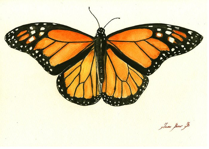 Butterfly Art Greeting Cards