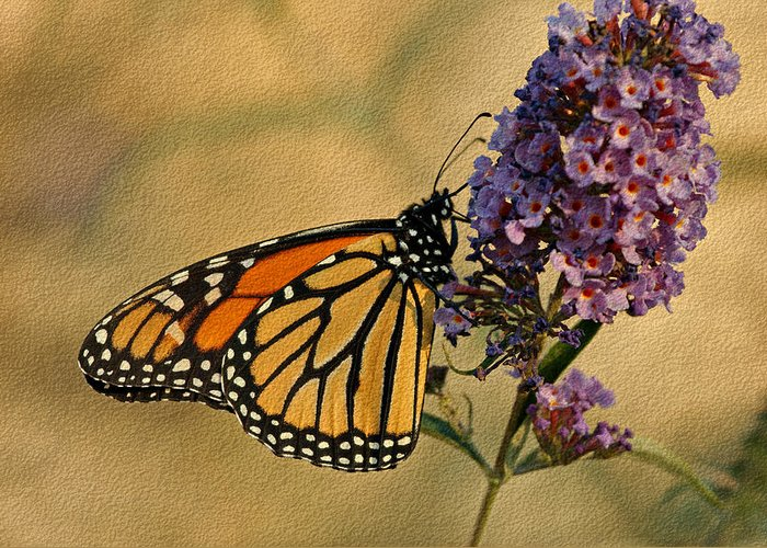 Butterfly Greeting Card featuring the photograph Monarch Butterfly by Sandy Keeton