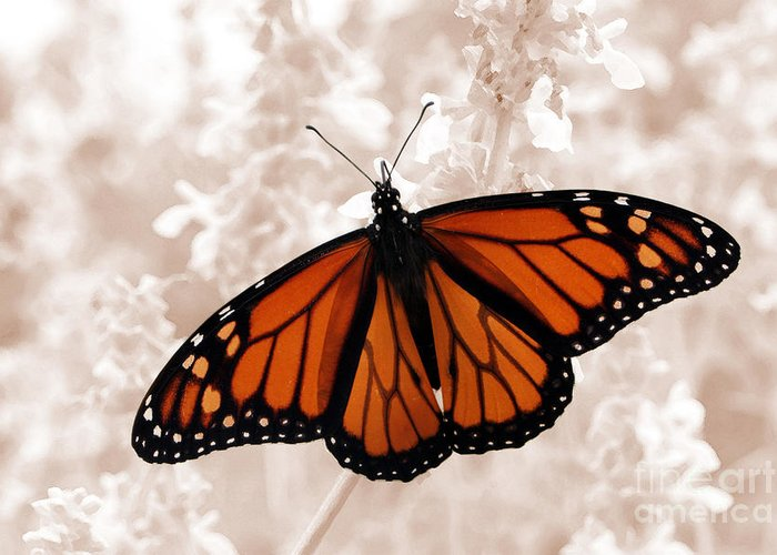 Monarch Greeting Card featuring the photograph Monarch by Jeannie Burleson