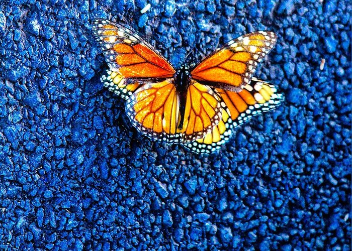 Monarch Butterflies Greeting Card featuring the photograph Monarchs Mating by Mele Jean Willow