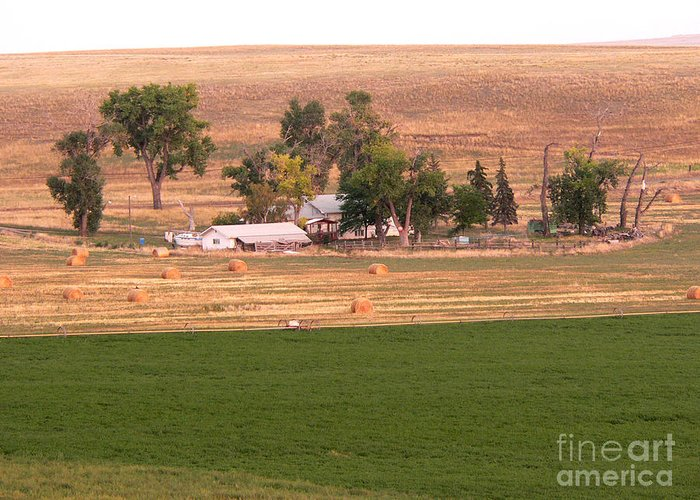 Great Falls Greeting Card featuring the photograph Montana Harvest Time by David Bearden