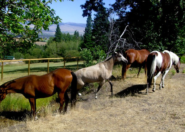 Horse Greeting Card featuring the photograph Montana Horses by Ralph Perdomo