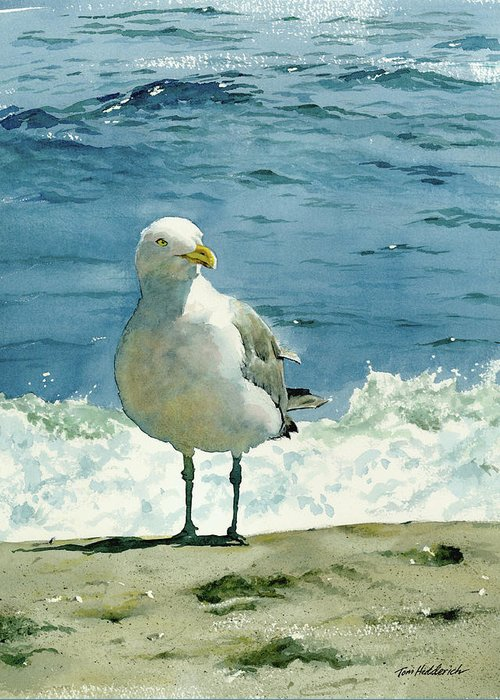 Seashore Print Greeting Card featuring the painting Montauk Gull by Tom Hedderich