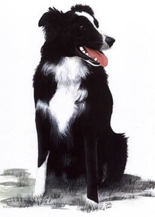 Pet Portrait Greeting Card featuring the painting Monty by Janice M Booth