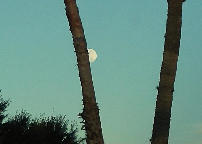 Greeting Card featuring the photograph Moon Hiding Behind The Palm by Miriam Marrero