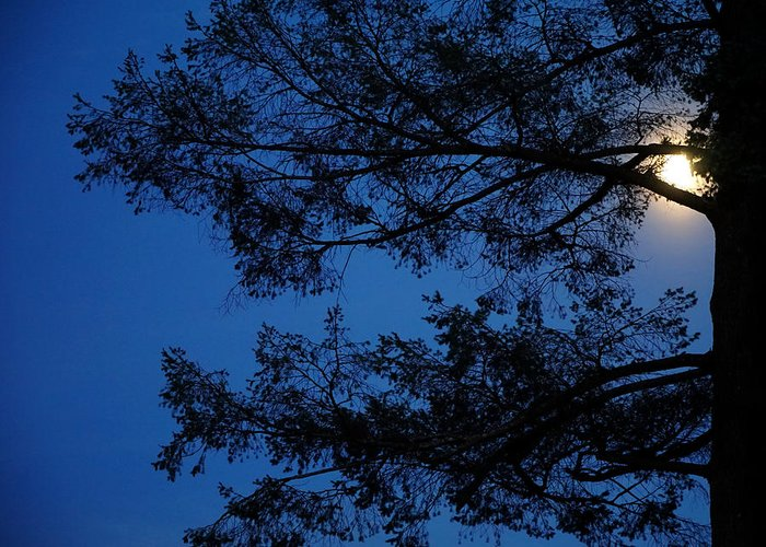 Night Greeting Card featuring the photograph Moon Hiding In The Tree by Lilia D