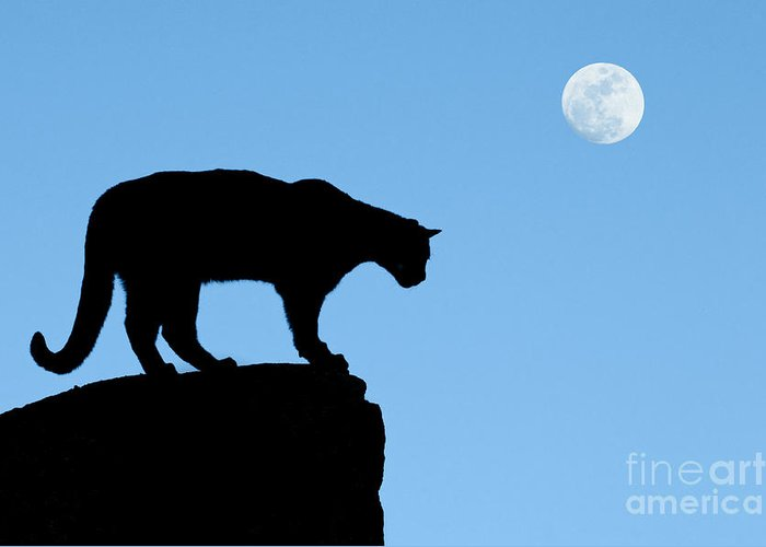 Cougar Greeting Card featuring the photograph Moonrise And Cougar by Sandra Bronstein