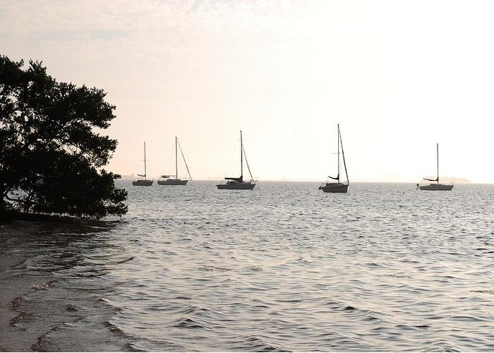 Scenic Greeting Card featuring the photograph Mooring Bay by Peter McIntosh